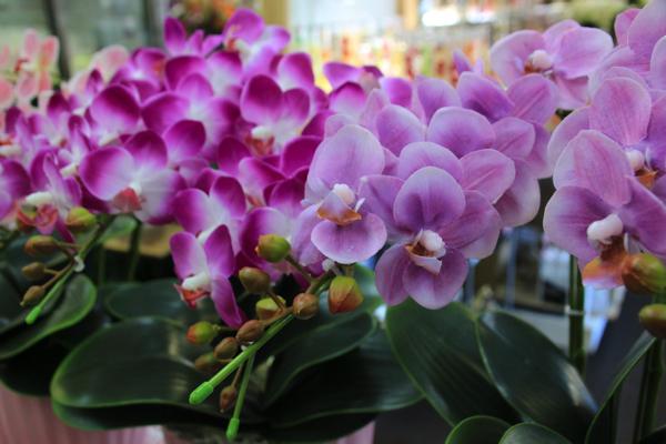福岡生花店